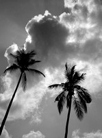 Coconut Clouds