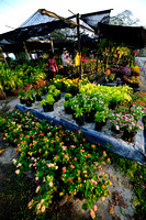 Sungei Buloh Flower Farm